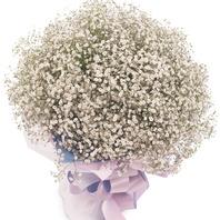 [플라워포유] 안개꽃다발 (RM_RBC8029) [꽃다발/결혼기념일/크리스마스/프로포즈/화이트데이/발렌타인데이]