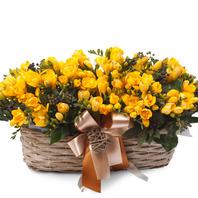 [플라워포유] 후리지아 정원(겨울상품)(RM_RAC2063) [꽃바구니/결혼기념일/크리스마스/프로포즈/화이트데이/발렌타인데이]