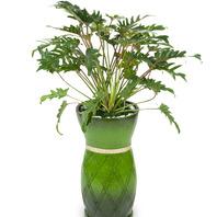 [플라워포유] 마블 필로덴드론 셀로움 (RM_RHS1060) [관엽식물/공기정화/개업/이사/화분]