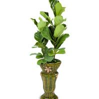 [플라워포유] 떡갈잎 고무나무 (RM_RHS1065) [공기정화식물/관엽식물/