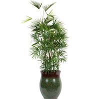 [플라워포유] 종려죽(대품) (RM_RHS1089) [관엽식물/공기정화/개업/이사/화분]