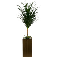 [플라워포유] 드라코 (고급) [공기정화식물/관엽식물/개업선물/이사선물]