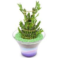 [플라워포유] 개운죽 (RM_RHS2036) [공기정화식물/관엽식물/화분배달/개업화분추천/창업선물/개업선물/이사선물/이사화분]