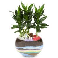[플라워포유] 금천죽 유리용기 (RM_RHS2037) [공기정화식물/관엽식물/화분배달/개업화분추천/창업선물/개업선물/이사선물/이사화분]