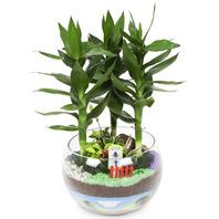 [플라워포유] 금천죽 (RM_RHS2038) [공기정화식물/관엽식물/화분배달/개업화분추천/창업선물/개업선물/이사선물/이사화분]