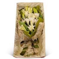 [플라워포유] 백합꽃박스 (RM_RCB3017) [꽃상자/결혼기념일/크리스마스/프로포즈/화이트데이/발렌타인데이/로즈데이/기념일/특별한날/생일선물]